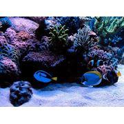 Изготовление аквариумов фото