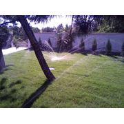 Автоматический полив растений и деревьев фото
