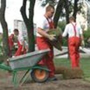 Уход за газонами и растениями фото
