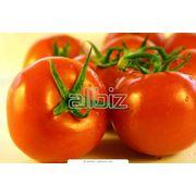 Плодоовощная продукция-заготовка производство продажа. фото