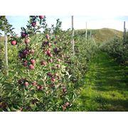 Установка под ключ садов и ягодников фото