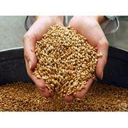 Инспекция зерна при отгрузке Андижанская область фото