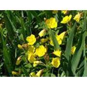 Обновление цветников фото
