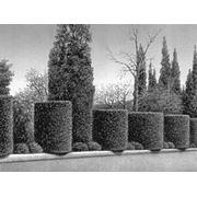 Формирование крон деревьев фото