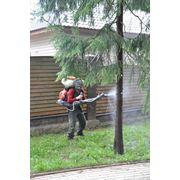 Опрыскивание деревьев фото