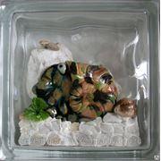 Стеклоблок эксклюзивный морская тематика МТ_016(А) 190х190х80мм фото