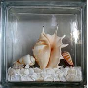Стеклоблок эксклюзивный морская тематика МТ_003(Б) 190х190х80мм фото