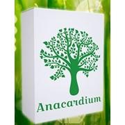Анакардиум от простуды фото