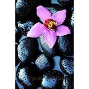 """Фотообои """"Орхидея на камнях"""" Wizard&Genius (Швейцария) фото"""