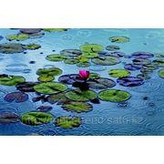 """Фотообои """"Водяные лилии"""" Wizard&Genius (Швейцария) фото"""