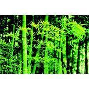 """Фотообои """"Весенний бамбук"""" Wizard&Genius (Швейцария)"""