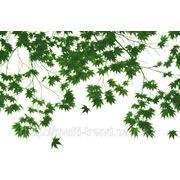 """Фотообои """"Осенние листья"""" Wizard&Genius (Швейцария) фото"""