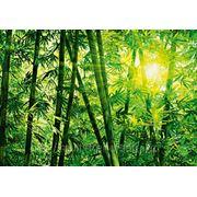 """Фотообои """"Бамбуковый лес"""" Wizard&Genius (Швейцария) фото"""