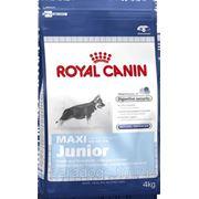 Корм Royal Canin Д/Собак Макси Юниор 4кг. фото