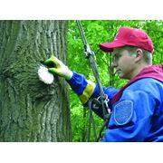 Лесопатологическое обследование фото