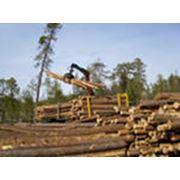 Предлагаем лесозаготовку фото