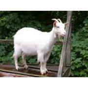 Санитарно-гигиенические работы в животноводстве фото