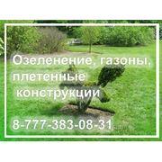 Озеленение вертикальные 8-(77-7)-38-3-0-8-3-1 фото