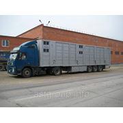 Полуприцеп - Скотовоз для перевозки свиней в три яруса фото
