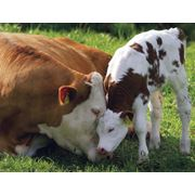 Поставка товаров и оборудования для животноводства фото