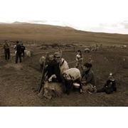 Консультация по молочному и мясному скотоводству фото