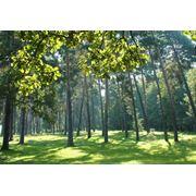 Охрана лесов от пожаров вредителей болезней фото