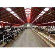 Услуги по реконструкции молочно-товарных ферм фото
