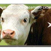 Реконструкция молочно-товарных ферм фото