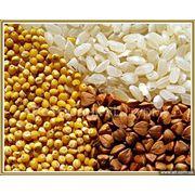 Услуги по закупке семян фото