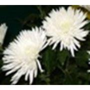 Выращивание цветов на нашем оборудовании фото
