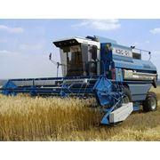 Уборка комбайном зерновых и масляничных культур фото