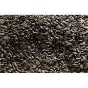 Очистка сортировка зерна крупы. фото
