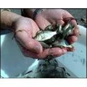 Рыбная ферма фото
