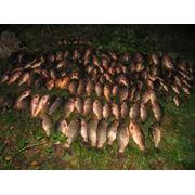 Воспроизводство рыбы и водных биоресурсов фото