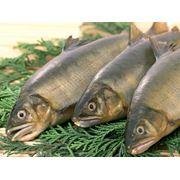 Сохранность рыбы