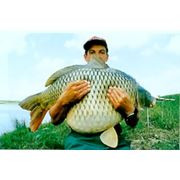 Гидробиологическое исследование состояния рыбохозяйственного водоёма