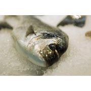 Заморозка рыбы фото