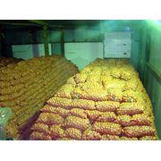 Длительное хранение сельхозпродукции фото