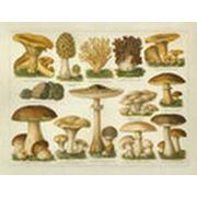 Консультации по выращиванию грибов фото