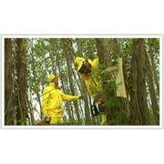 Уничтожение сорной растительности. фото