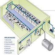 Установка (монтаж) линейных молокопроводов фото