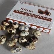 Яйца перепелиные ТУ 9846-00419816-99