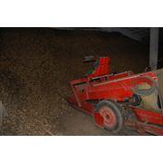 Навальное хранение сельхозпродукции насыпью в буртах фото