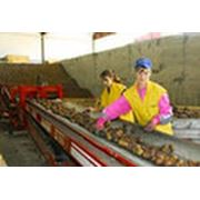 Переработка продукции сельскохозяйственной фото