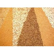 Закупка масличных культур фото