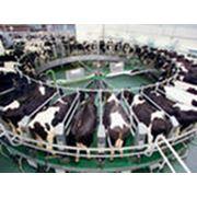 Технологическая поддержка молочно-товарной фермы фото