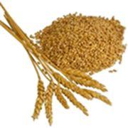 Подработка хранение зерна и маслосемян подсолнечника фото