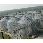 Хранение пшеницы фото