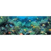 Светящиеся 3D обои, Коралловый риф