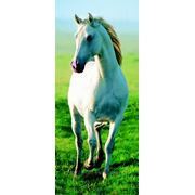 """Фотообои """"Белая лошадь"""" Wizard&Genius (Швейцария)"""